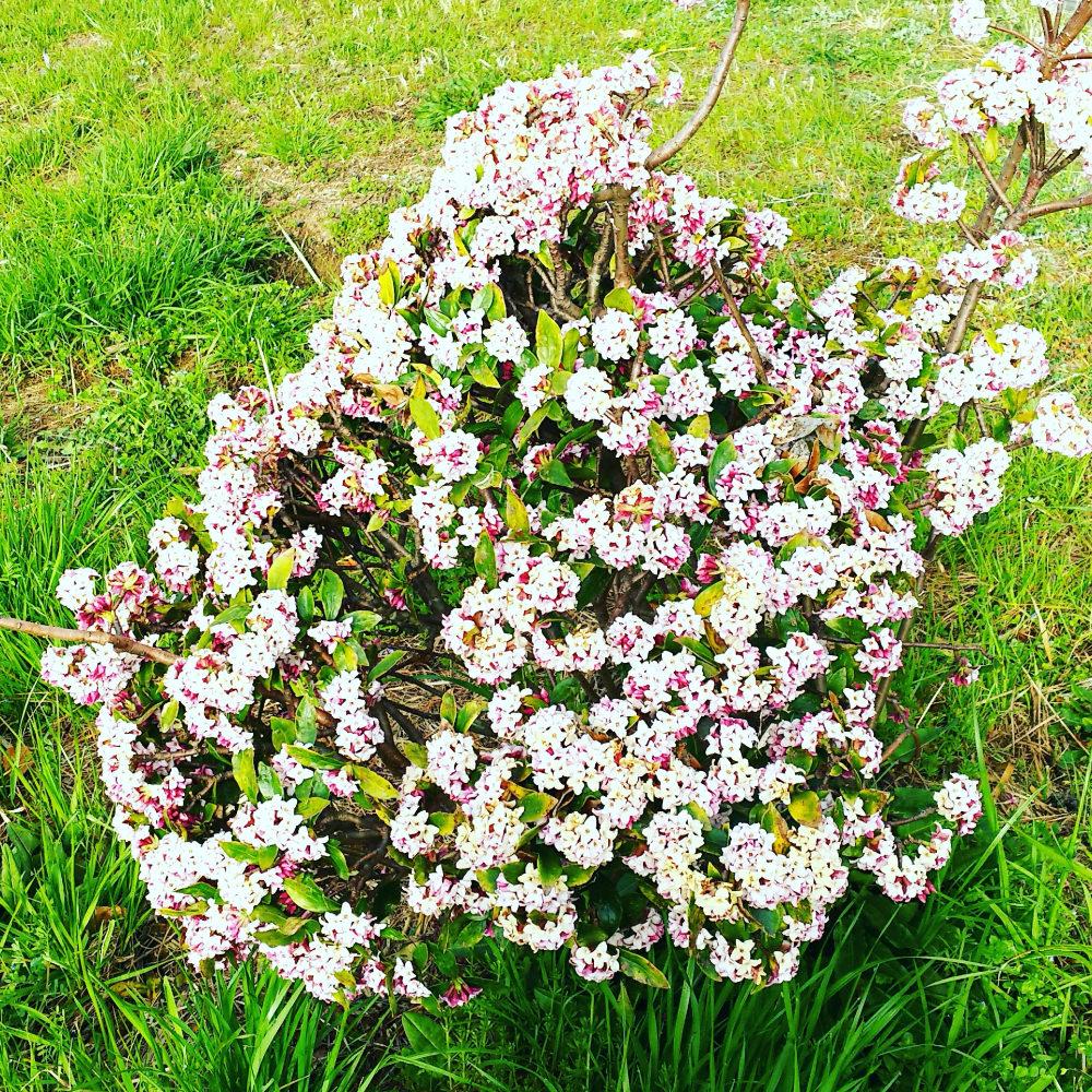 エステティシャン美容ブログ:#みずみずしい春肌へ
