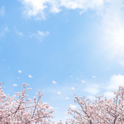 エステティシャン美容ブログ:#桜の季節